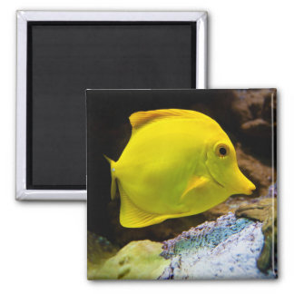 Yellow surgeon 2 inch square magnet