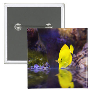 Yellow Surgeon fish looks at it's reflection Button