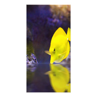 Yellow Surgeon fish looks at it's reflection Card