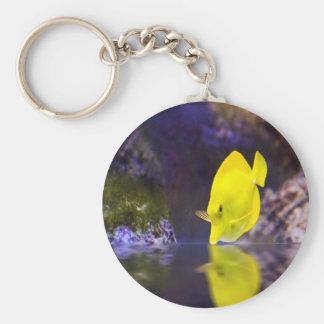 Yellow Surgeon fish looks at it's reflection Keychain