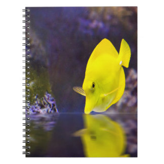 Yellow Surgeon fish looks at it's reflection Note Books