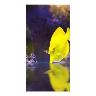 Yellow Surgeon fish looks at it's reflection Custom Photo Card