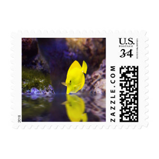 Yellow Surgeon fish looks at it's reflection Stamp