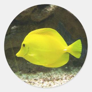 Yellow Surgeon Fish Stickers