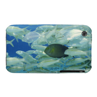 Yellow surgeon fish with yellow stripe goldfish Case-Mate iPhone 3 cases