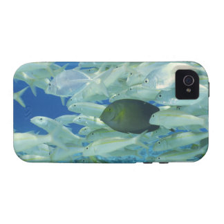 Yellow surgeon fish with yellow stripe goldfish vibe iPhone 4 cover