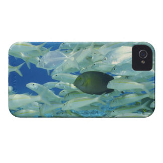 Yellow surgeon fish with yellow stripe goldfish iPhone 4 Case-Mate cases