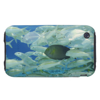 Yellow surgeon fish with yellow stripe goldfish iPhone 3 tough cover
