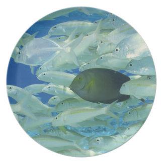 Yellow surgeon fish with yellow stripe goldfish melamine plate
