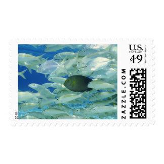 Yellow surgeon fish with yellow stripe goldfish stamp