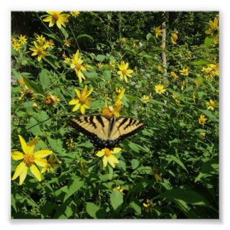 Yellow Swallow Tail Butterfly Poster
