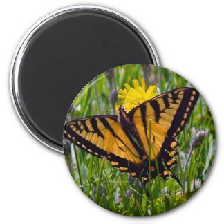 Yellow Swallowtail Butterfly 2 Inch Round Magnet