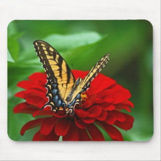 Yellow Swallowtail Butterfly and Zinnia Mouse Pad