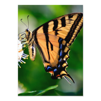 Yellow Swallowtail Butterfly Card