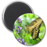 Yellow Swallowtail Butterfly  Circular Magnet Magnets