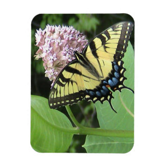 Yellow Swallowtail butterfly Flexi Magnet
