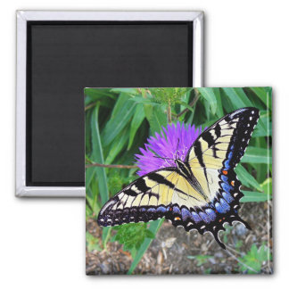 Yellow Swallowtail Butterfly Gift Magnet