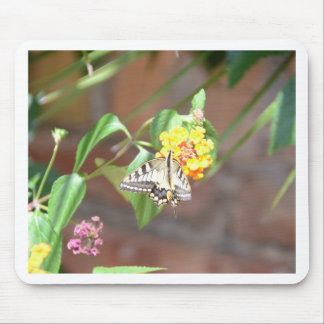 Yellow Swallowtail Butterfly Mouse Pads