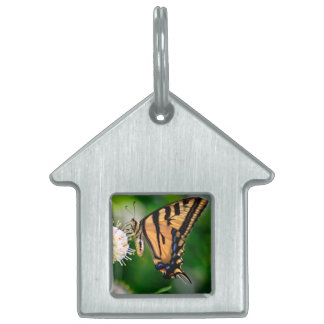 Yellow Swallowtail Butterfly Pet Tag