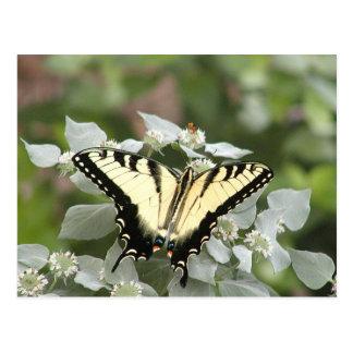 Yellow swallowtail butterfly postcard