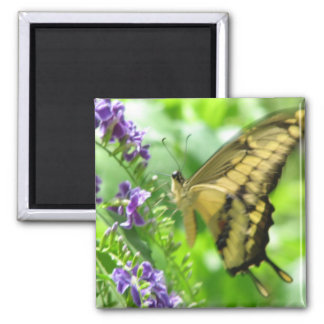 Yellow Swallowtail Butterfly Square Magnet Refrigerator Magnets