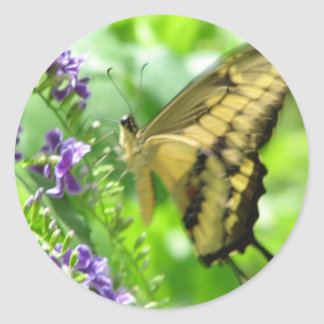 Yellow Swallowtail Butterfly Square Round Stickers