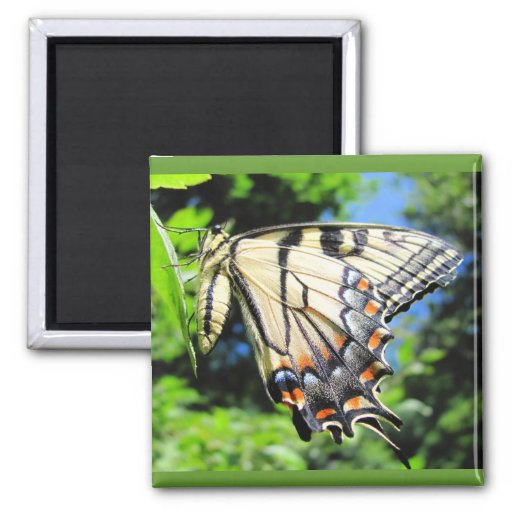 Yellow Swallowtail ~ magnet