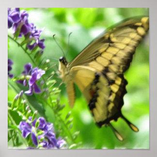 Yellow Swallowtail Poster Print