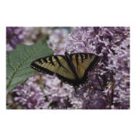 Yellow Swallowtail Posters