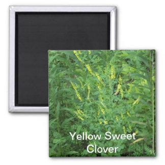 Yellow Sweet  Clover Magnet