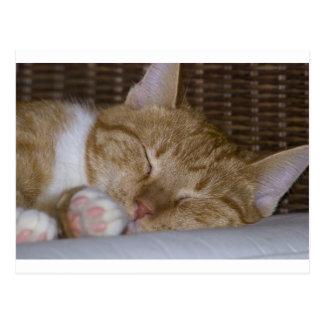 Yellow tabby cat postcard