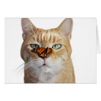 Yellow Tabby with Butterfly on Nose Card