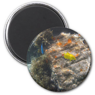 Yellow Tang & Blue Damsel 2 Inch Round Magnet