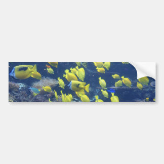 Yellow tang fish tank color photo bumpersticker car bumper sticker