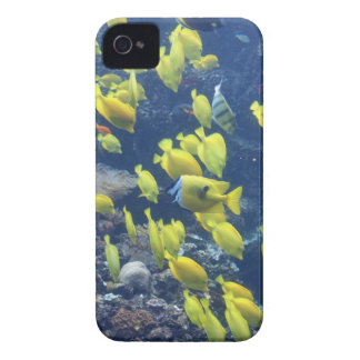 Yellow tang fish tank color photo iphone 4 case