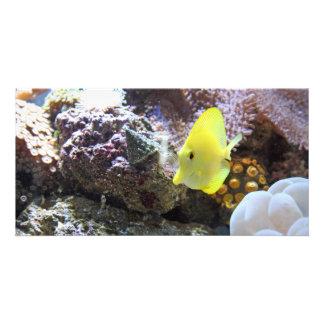 yellow tang photo card