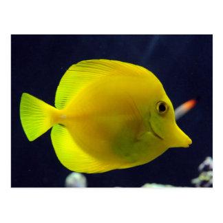 Yellow Tang Postcard