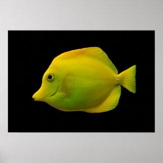 Yellow Tang Poster