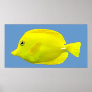 Yellow Tang Tropical Fish Poster