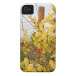 Yellow Texas Brush Case-Mate iPhone 4 Case