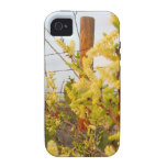 Yellow Texas Brush Vibe iPhone 4 Cover