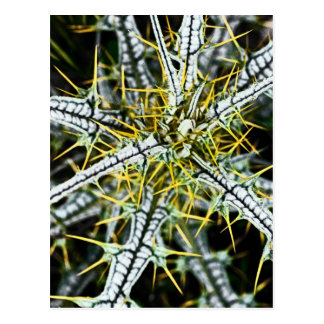 Yellow Thistle Thorns, Natural Postcard
