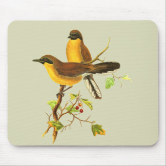 Yellow-throated Laughingthrush Mouse Pad