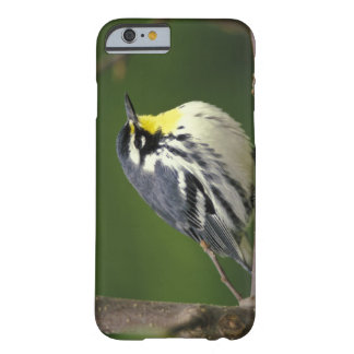Yellow-throated Warbler (Dendroica dominica) Barely There iPhone 6 Case