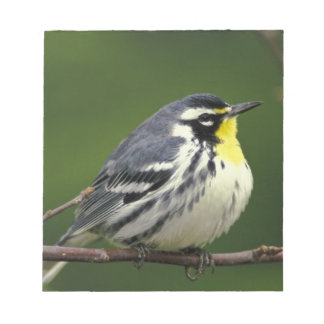 Yellow-throated Warbler (Dendroica dominica) Notepad