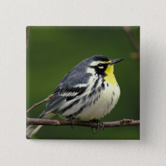 Yellow-throated Warbler (Dendroica dominica) Pinback Button