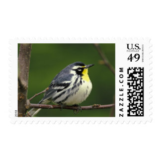 Yellow-throated Warbler (Dendroica dominica) Postage Stamp
