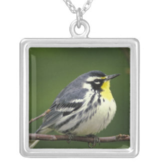 Yellow-throated Warbler (Dendroica dominica) Silver Plated Necklace