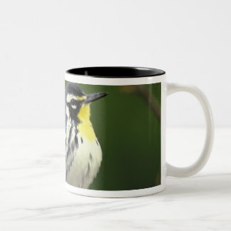 Yellow-throated Warbler (Dendroica dominica) Two-Tone Coffee Mug