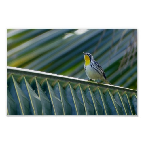 Yellow-Throated Warbler in a Palm Tree Poster
